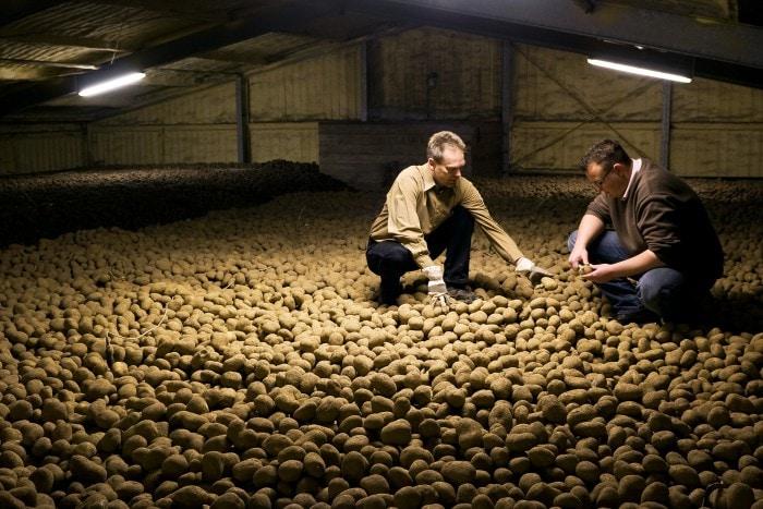 Kartoffelpruefer